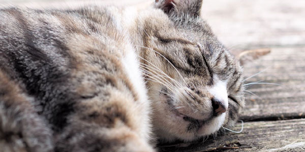 基礎体温表のグラフを安定させる睡眠