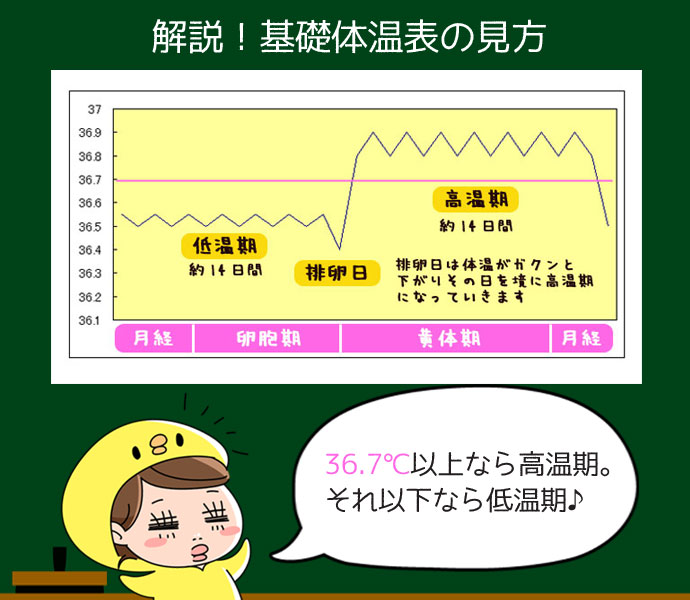 基礎体温表の見方