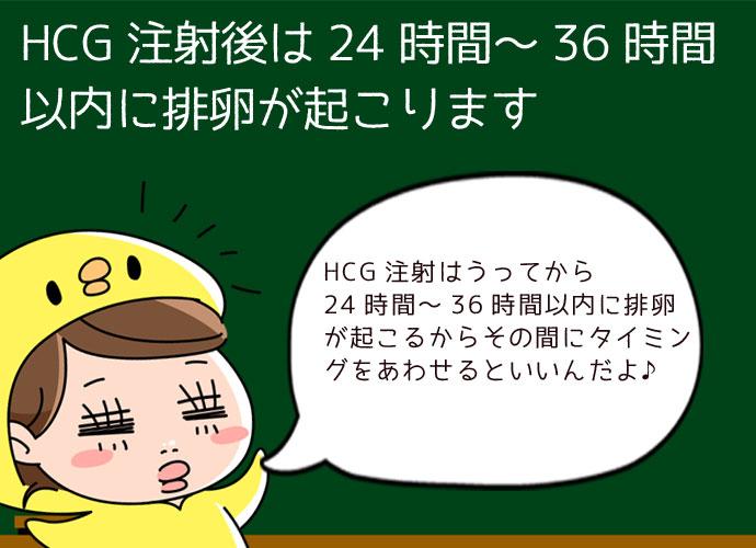 HCG注射後は24時間から36時間後に排卵が促される